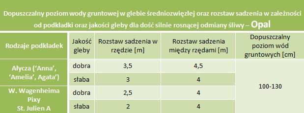 Dopuszczalny poziom wód gruntowych oraz rozstaw sadzenia - Śliwa Opal (korona wrzecionowa)