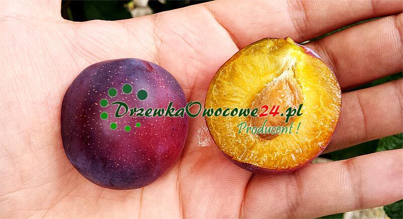 Śliwa Opal - owoc