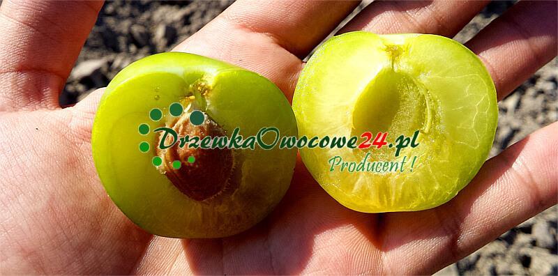 Owoce - Śliwa Renkloda Ulena