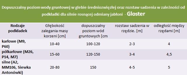 Gloster - rozstaw sadzenia i poziom wod gruntowych.