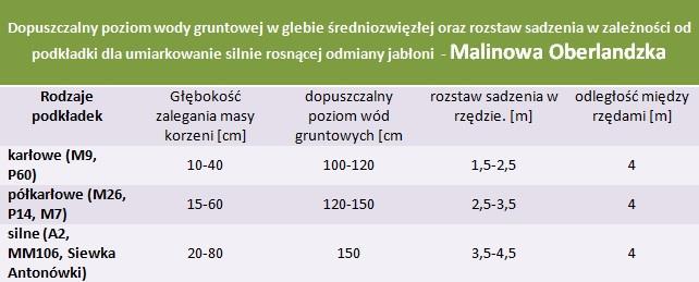 Malinowa Oberlandzka - rozstaw sadzenia i poziom wod gruntowych.