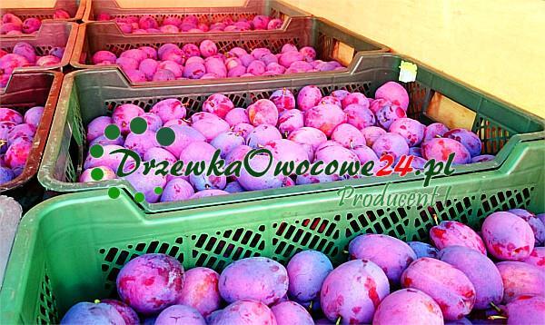 Śliwa Amers (mieszaniec) - owoce