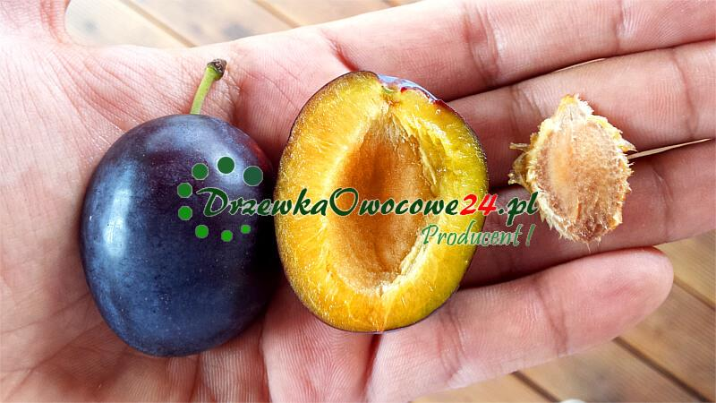 Śliwa Węgierka Dąbrowicka - owoc