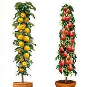Kolumnowe drzewka owocowe