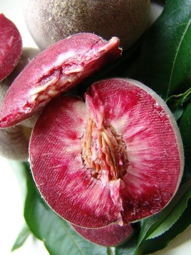 Brzoskwinia czerwonomiąższowa - sadzonki