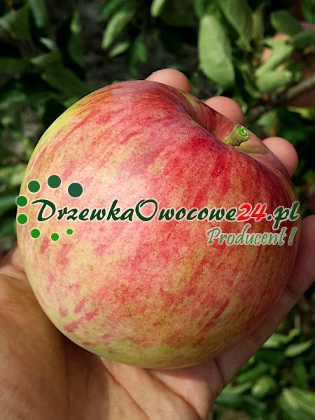 jabłko Piros