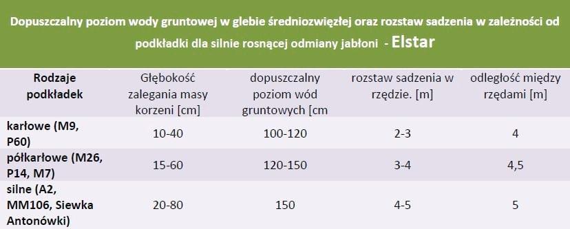 rozstaw sadzenia i poziom wod gruntowych - Elstar