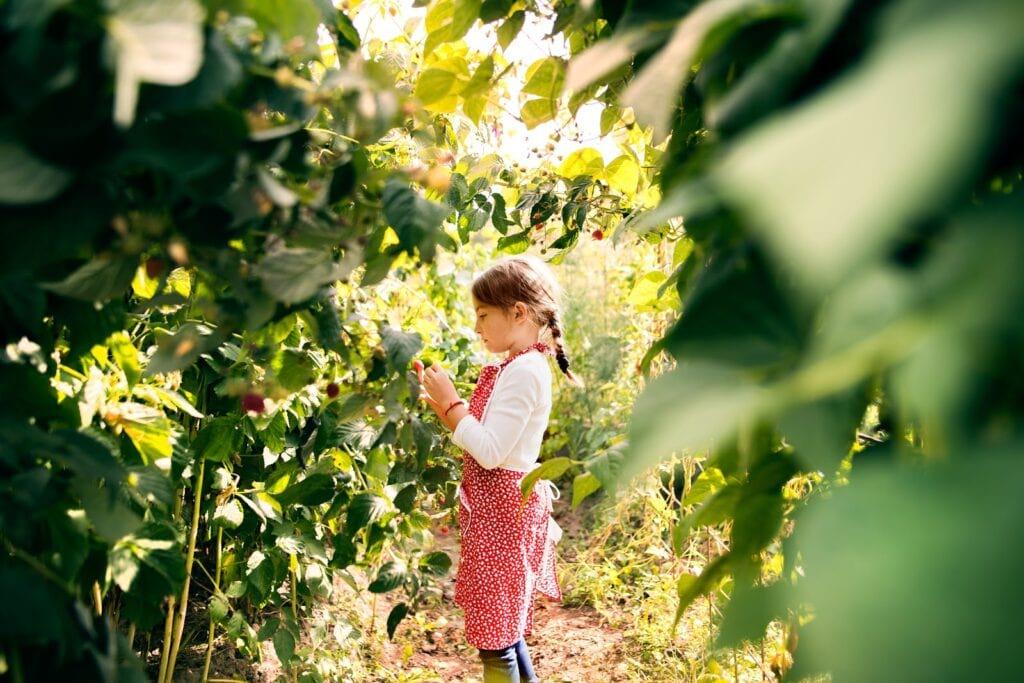 Mała dziewczynka zbierająca owoce