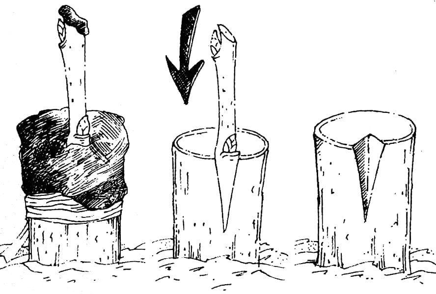 szczepienie w klin