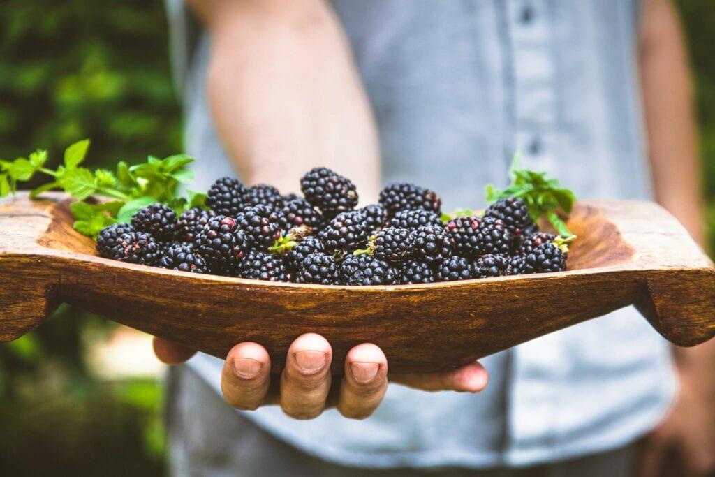 świeżo zebrane owoce jeżyny bezkolcowej